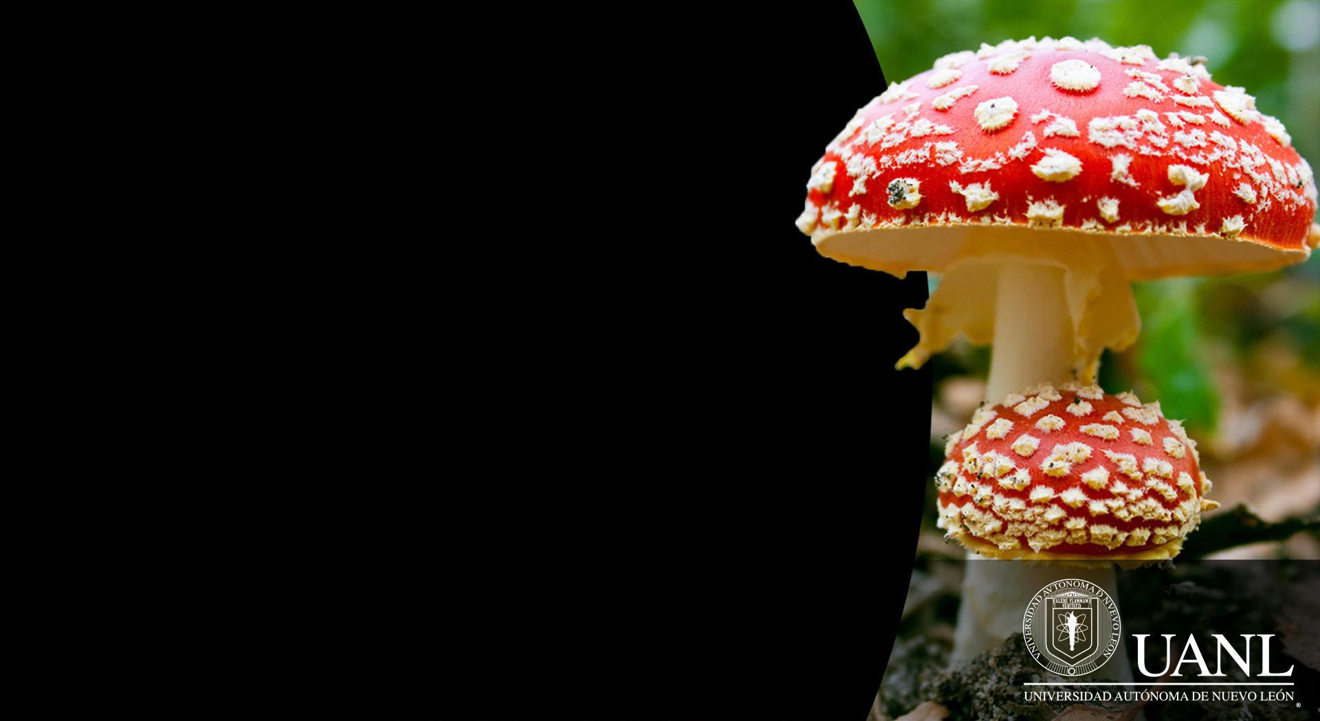 El Reino de los hongos