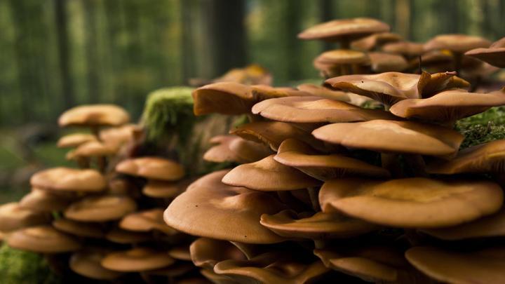 Los cigomicetos - Tipos de hongos en la pared ...